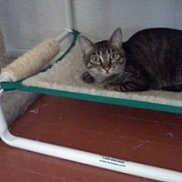 Adopt A Pet :: Twyla - Prescott, AZ
