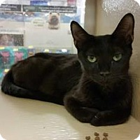 Adopt A Pet :: Parrish - Plymouth Meeting, PA