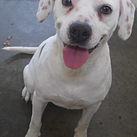 Adopt A Pet :: Missy - Manning, SC