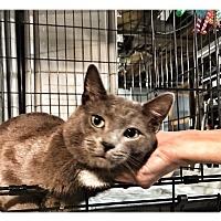 Adopt A Pet :: Gandolf - Ronkonkoma, NY