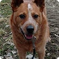 Adopt A Pet :: Willow - Painted Post, NY