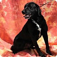 Adopt A Pet :: Cullen - Thomasville, NC