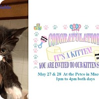 Adopt A Pet :: DIABLO - Northfield, OH