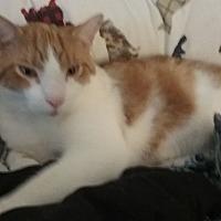 Adopt A Pet :: Garfield - Victor, NY