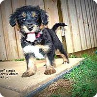 Adopt A Pet :: Thunder - Gadsden, AL