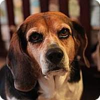 Adopt A Pet :: Emma - Indianapolis, IN