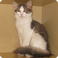 Adopt A Pet :: Whiskers - Farmingdale, NY