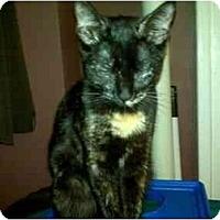 Adopt A Pet :: Marble - New York, NY