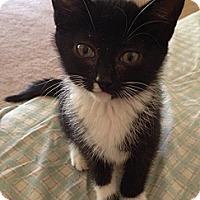 Adopt A Pet :: Bitsy - Monroe, GA