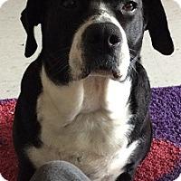 Adopt A Pet :: Missy Mae - Hamilton, ON