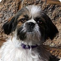 Adopt A Pet :: Kesha-Adoption pending - Bridgeton, MO