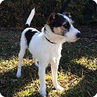 Adopt A Pet :: Mike in Denton ADOPT PENDING - Dallas/Ft. Worth, TX