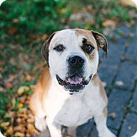 Adopt A Pet :: Diesel - Reisterstown, MD