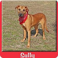 Adopt A Pet :: Sully - Hillsboro, TX
