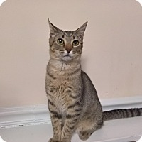 Adopt A Pet :: SEAN - Raleigh, NC