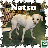 Adopt A Pet :: Natsu - Fallston, MD