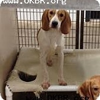 Adopt A Pet :: Donner - Norman, OK