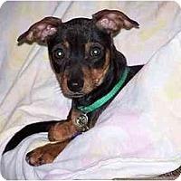 Adopt A Pet :: Molly - Nashville, TN