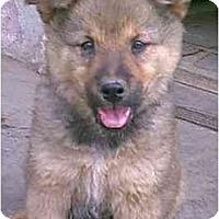 Adopt A Pet :: KEESHA - dewey, AZ