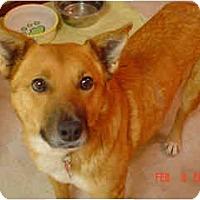 Adopt A Pet :: Sayde, in Flagstaff - Scottsdale, AZ