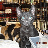 Adopt A Pet :: Samantha - Riverside, RI