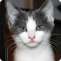 Adopt A Pet :: Felix - Irvine, CA