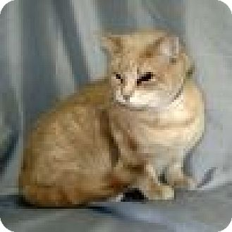Domestic Shorthair Cat for adoption in Powell, Ohio - Melody