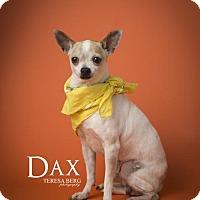 Adopt A Pet :: Dax - Dallas, TX
