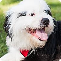 Adopt A Pet :: Sammy - West LA, CA