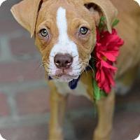 Adopt A Pet :: Mina - Baton Rouge, LA