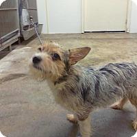 Adopt A Pet :: Rags - Upper Sandusky, OH