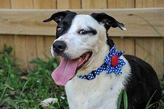 Labrador Retriever Mix Dog for adoption in Jackson, Mississippi - Gigi