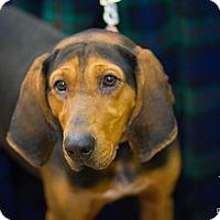 Adopt A Pet :: Spruce - Evansville, IN