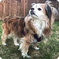 Adopt A Pet :: Abby - Pitt Meadows, BC