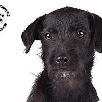 Adopt A Pet :: Ellse - Lodi, CA
