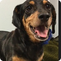 Adopt A Pet :: Milly - Weston, FL