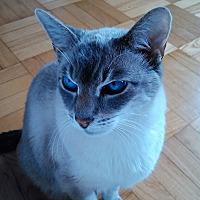 Adopt A Pet :: Champ - Toronto, ON