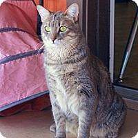 Adopt A Pet :: Princess - Tucson, AZ