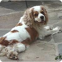 Adopt A Pet :: Ruby Lane - Sugarland, TX