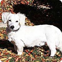 Adopt A Pet :: Ghost - San Jose, CA