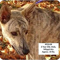 Adopt A Pet :: # 935-08 - AT ANIMAL SHELTER - Zanesville, OH
