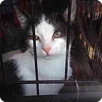 Adopt A Pet :: Katie - Brooklyn, NY