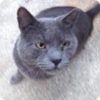 Adopt A Pet :: Specter (Vince's cat) - Medford, NJ