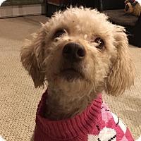Adopt A Pet :: Eleanor - Tumwater, WA