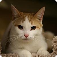 Adopt A Pet :: Trent - Cary, NC