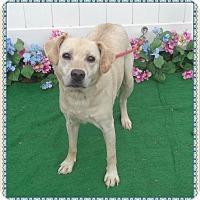 Adopt A Pet :: BANKS see also JAZZY - Marietta, GA