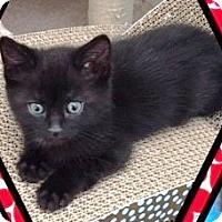 Adopt A Pet :: Jagger - Orange, CA