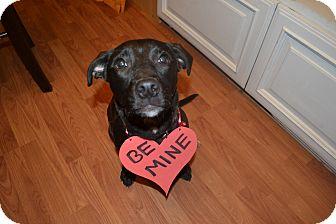 Labrador Retriever Mix Puppy for adoption in Marietta, Georgia - Reagan