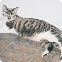Adopt A Pet :: Zoe - Miami, FL