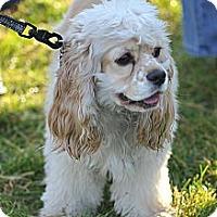 Adopt A Pet :: SAGE - Tacoma, WA
